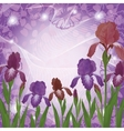 Flowers iris and ipomoea contours vector