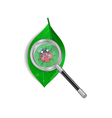 Magnifying glass with ladybird and green leaf vector
