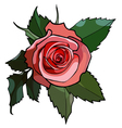 Pink rose in a frame of green leaves vector