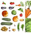 Fresh vegetables green collection vector