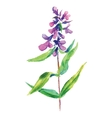 Lilac flower floral vector