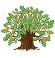 Oak tree with acorns vector