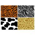 Tiger zebra cow and giraffe print vector