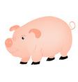 Pets animal pig vector