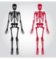 Skeletons - human bones set eps10 vector