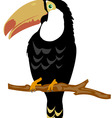 Bird toucan on branch tree vector