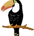Bird toucan on branch tree vector