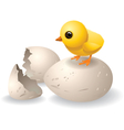 Cute hatched chick vector