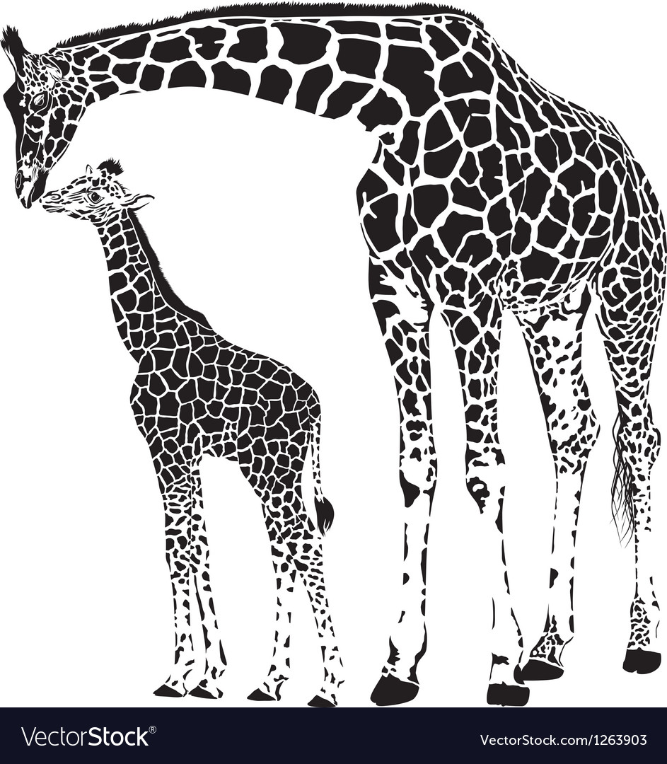 Animal family of giraffes vector | Price: 1 Credit (USD $1)