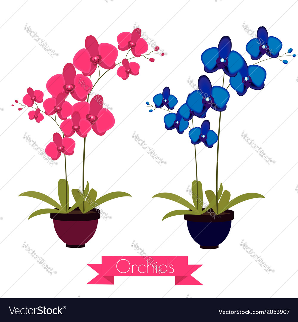 Coloful orchids in the pot vector | Price: 1 Credit (USD $1)