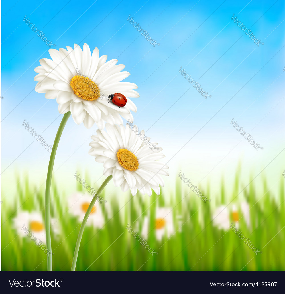 Nature spring daisy flower with ladybug vector | Price: 3 Credit (USD $3)