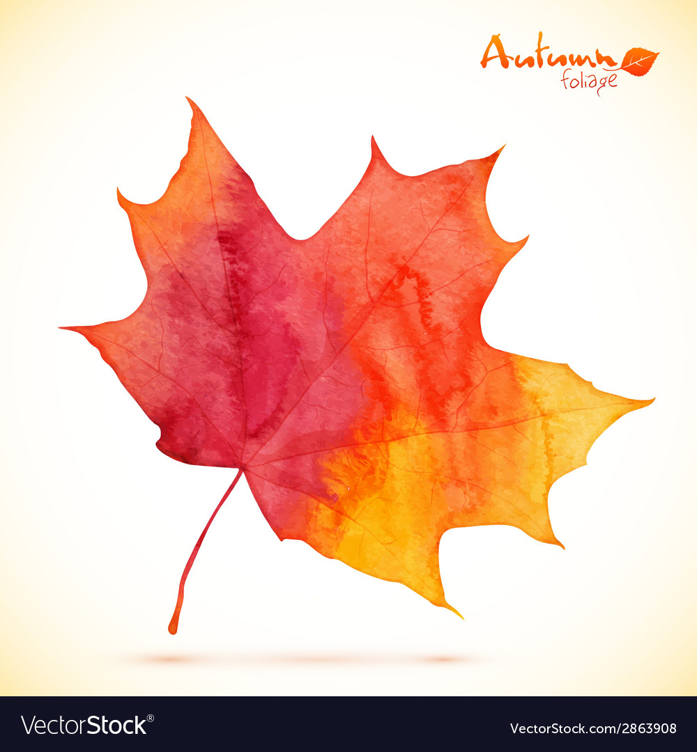 Watercolor red maple leaf vector | Price: 1 Credit (USD $1)