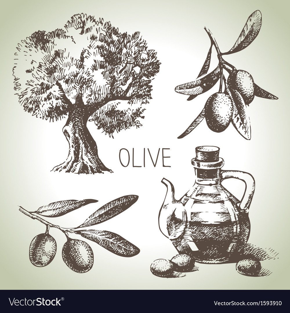 Hand drawn olive set vector | Price: 1 Credit (USD $1)