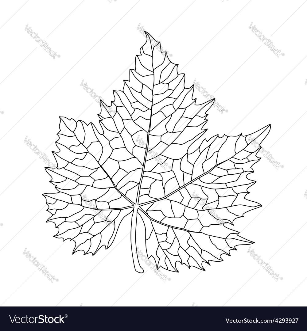 Black on white grape leaf line art vector   Price: 1 Credit (USD $1)