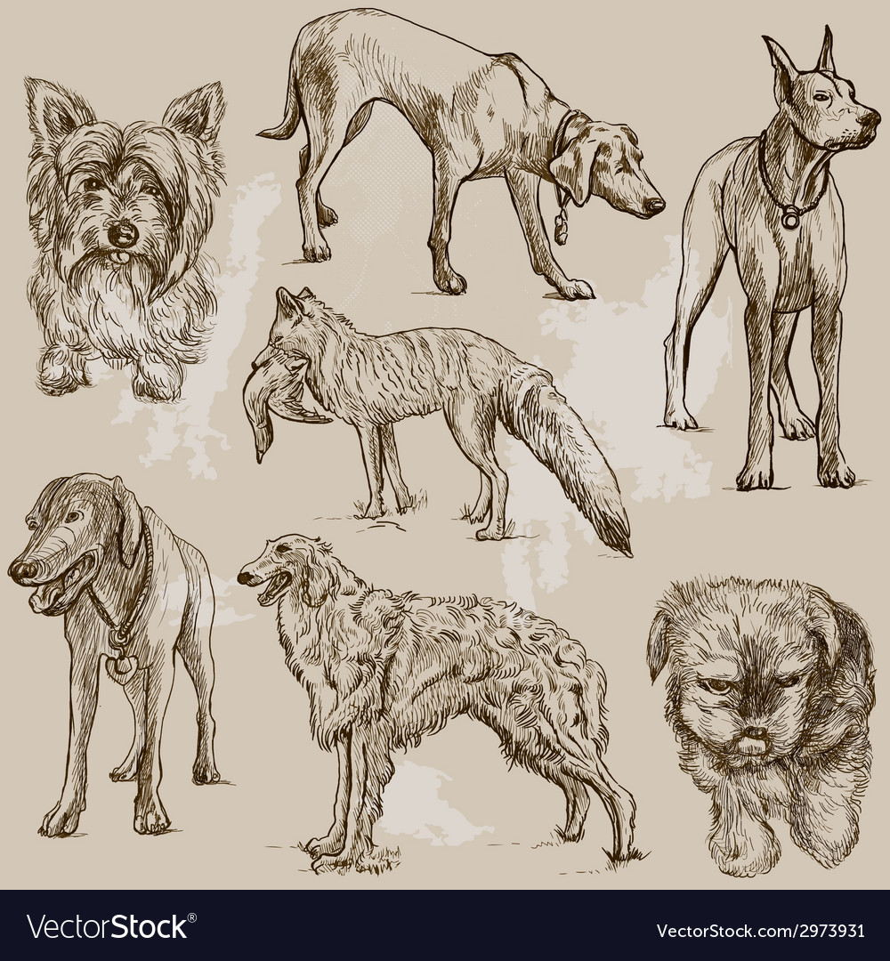 Dogs - an hand drawn pack vector   Price: 1 Credit (USD $1)