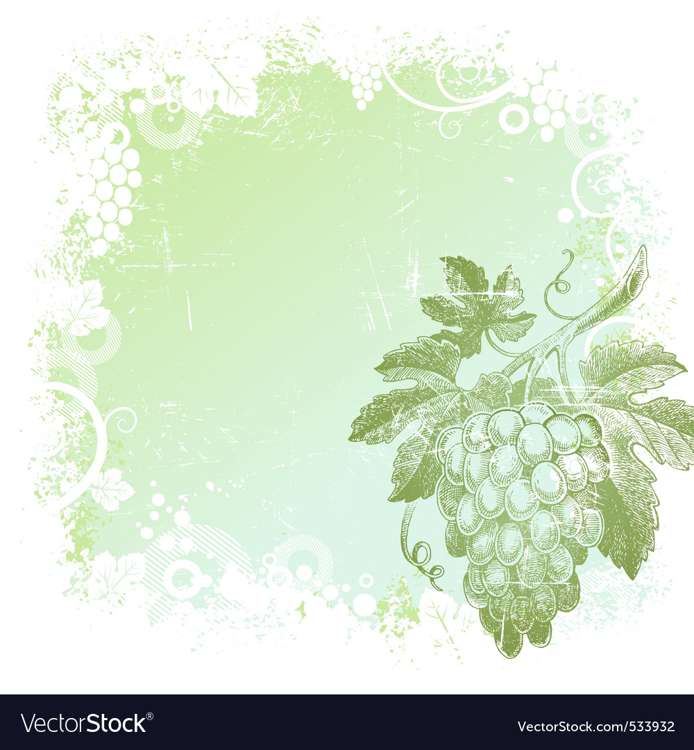 Hand drawn bunch of grapes vector | Price: 1 Credit (USD $1)