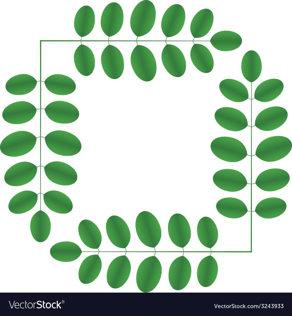 Acacia twigs - square vector | Price: 1 Credit (USD $1)