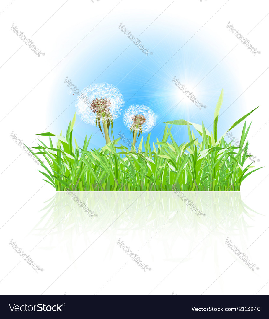 Green grass ith dandelion on white background vector | Price: 1 Credit (USD $1)