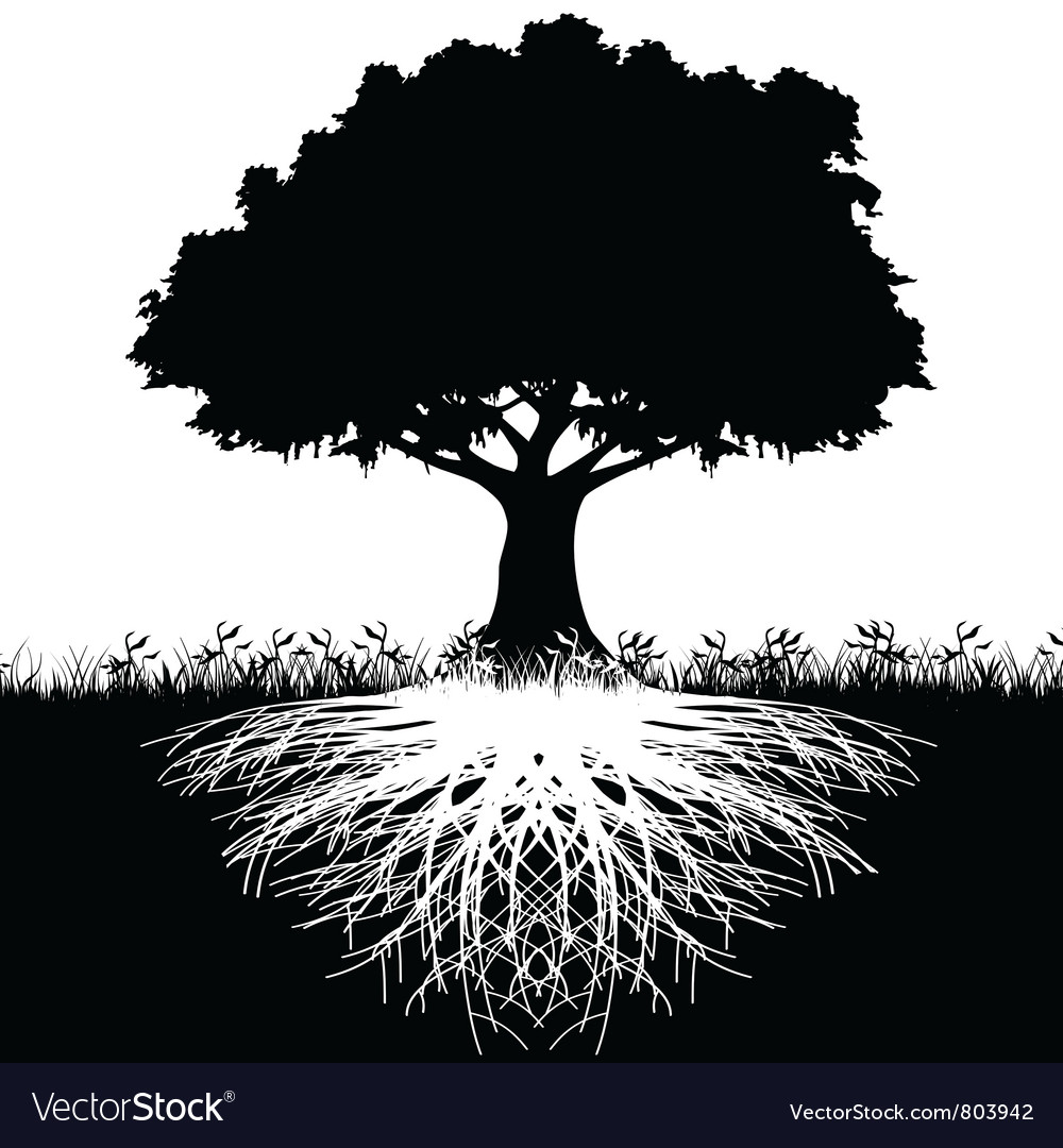 Tree roots silhouette vector | Price: 1 Credit (USD $1)