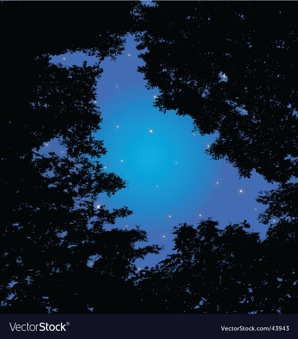 Forest and night sky vector | Price: 1 Credit (USD $1)