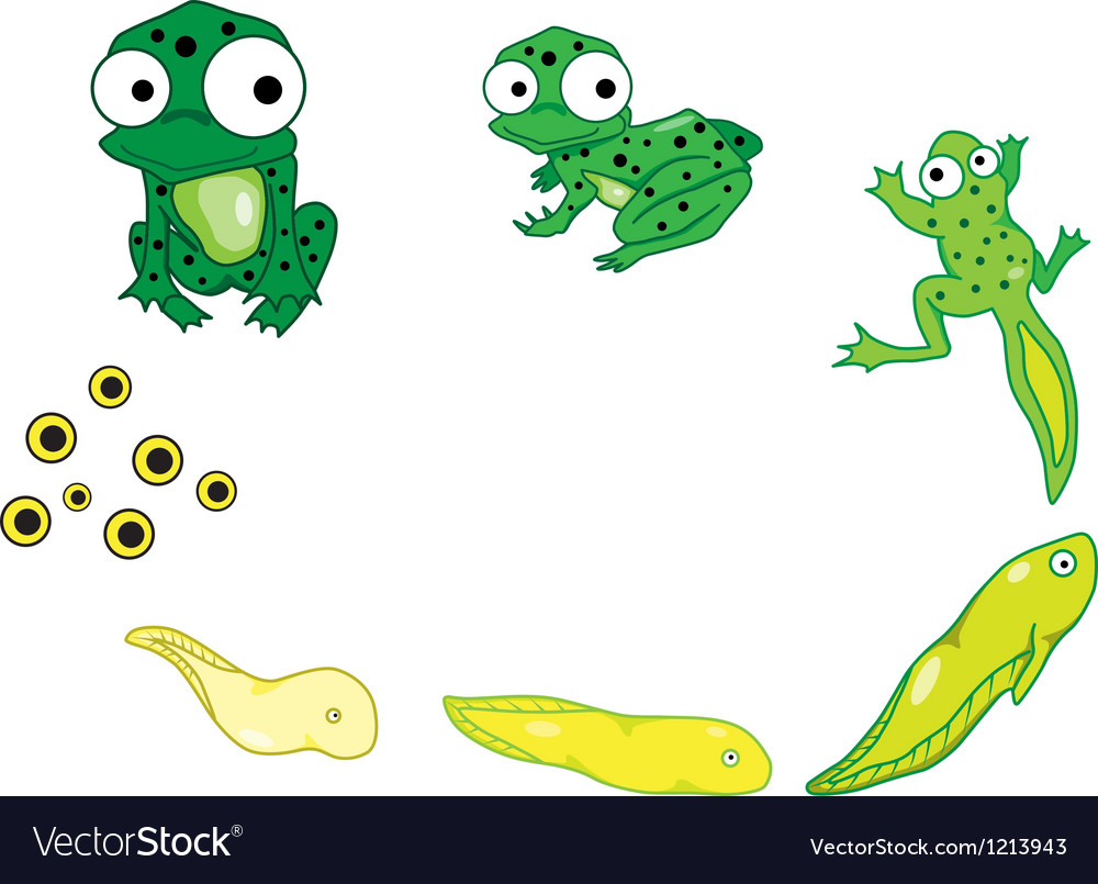 Frog cartoon vector | Price: 3 Credit (USD $3)