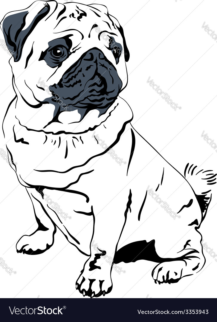 Sweet dog pug breed hand drawing vector | Price: 1 Credit (USD $1)