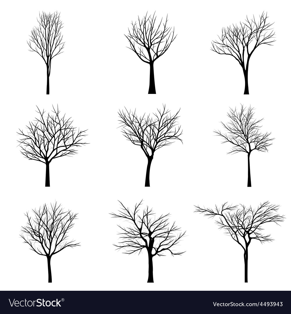 Trees with dead branch vector   Price: 1 Credit (USD $1)
