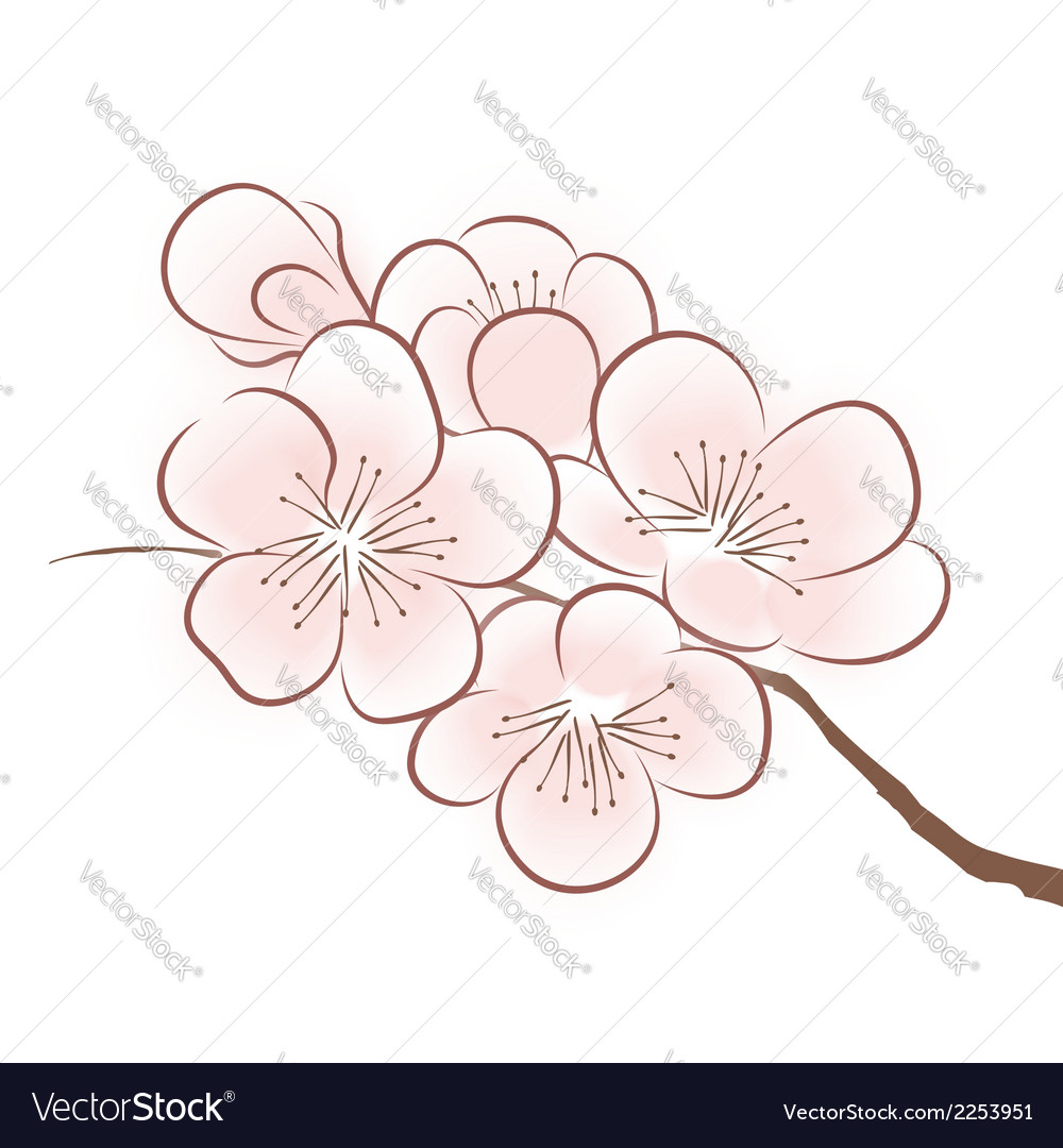 Spring cherry blossom vector | Price: 1 Credit (USD $1)