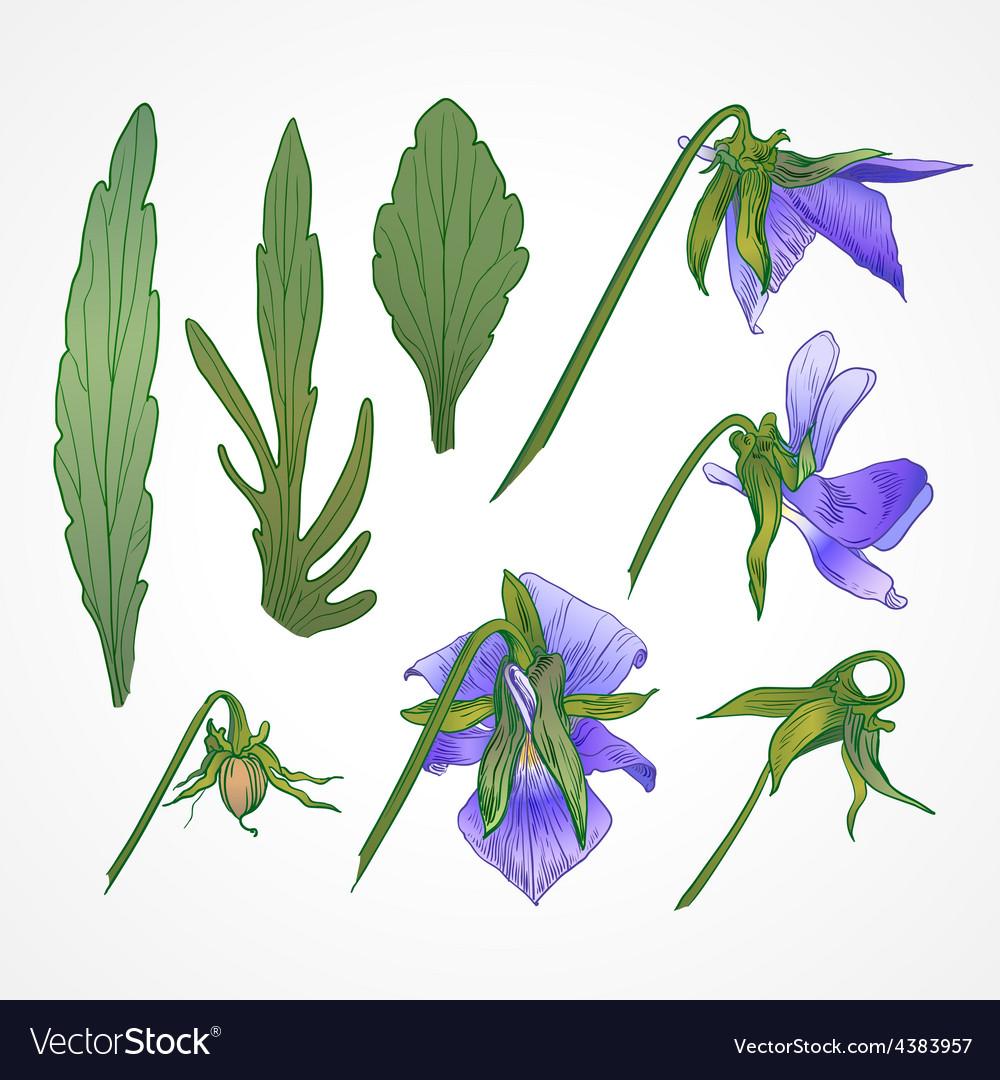 Botanical flowers vintage vector   Price: 1 Credit (USD $1)
