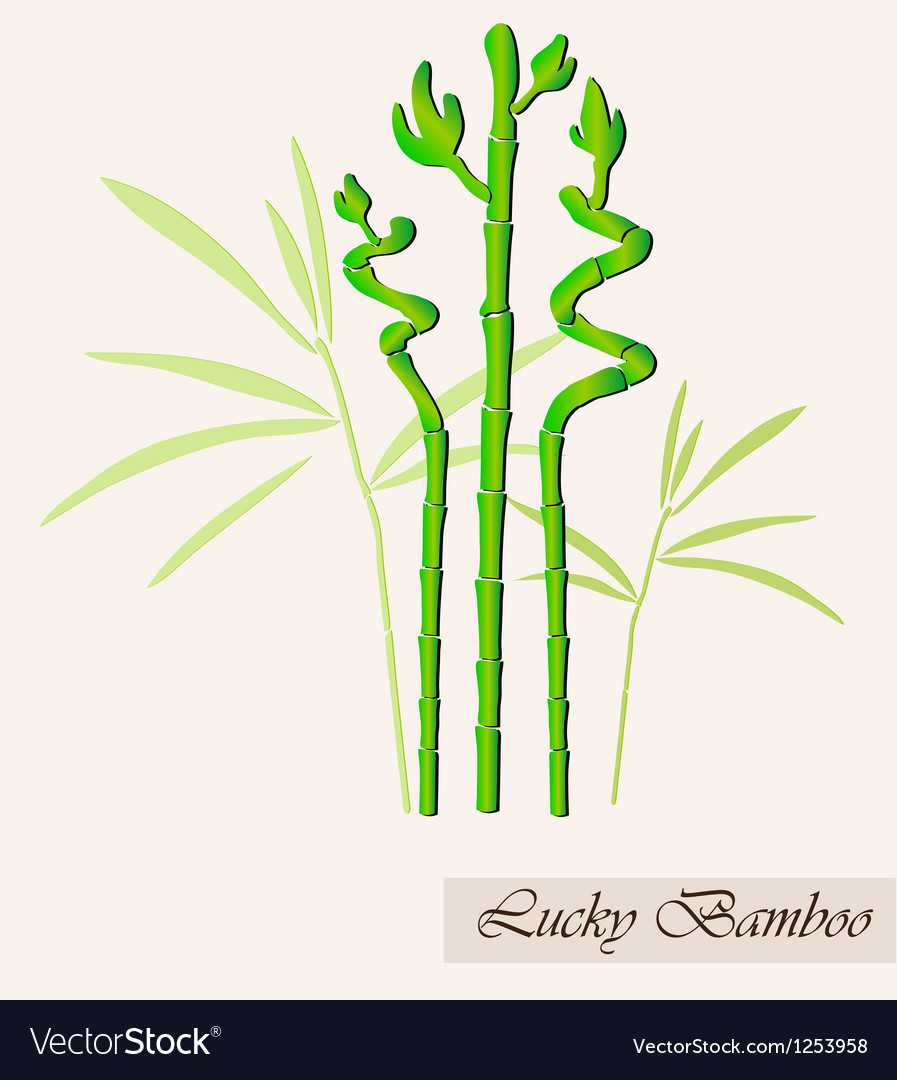 Lucky bamboo vector | Price: 1 Credit (USD $1)