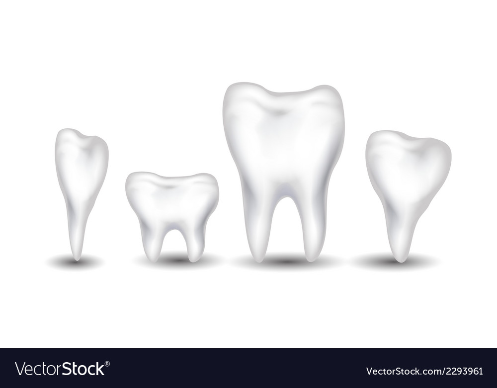 Tooth collection for you design vector | Price: 1 Credit (USD $1)