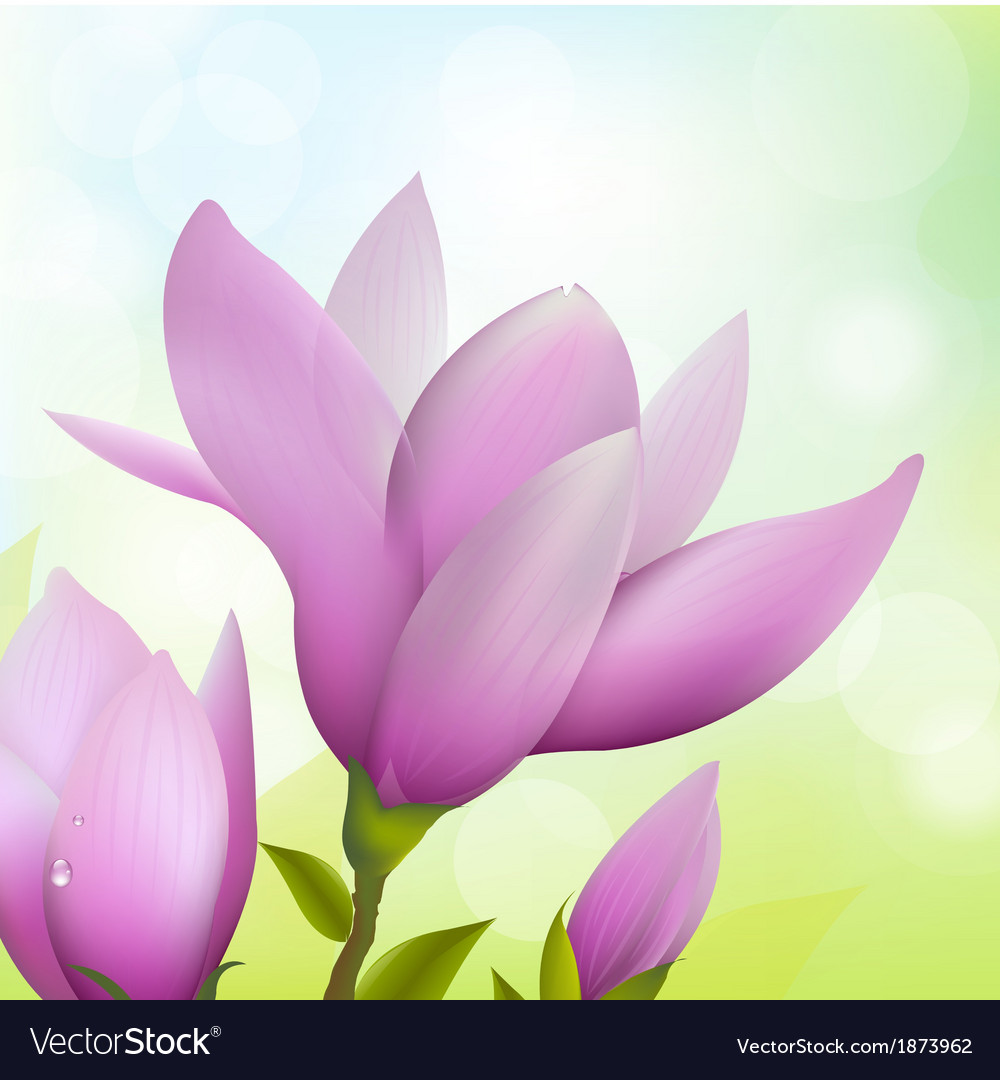 Magnolia flower vector | Price: 1 Credit (USD $1)