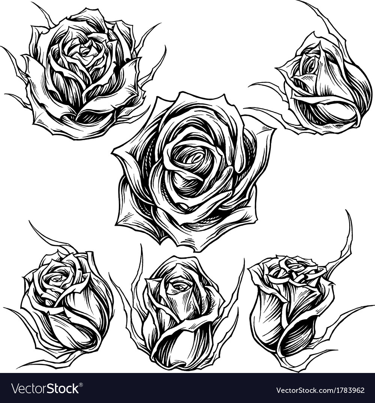 Roses set vector | Price: 1 Credit (USD $1)