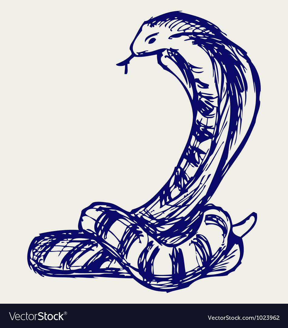 Snake sketch vector | Price: 1 Credit (USD $1)