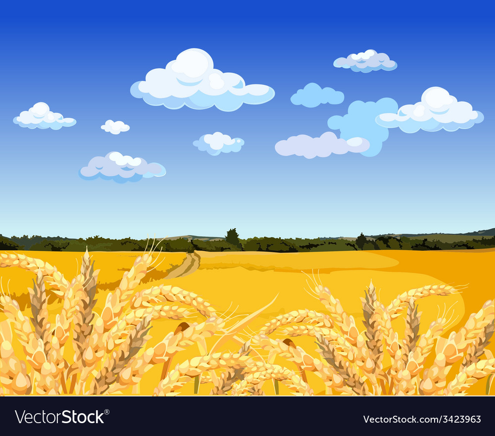 Landscape yellow field with wheat vector | Price: 3 Credit (USD $3)