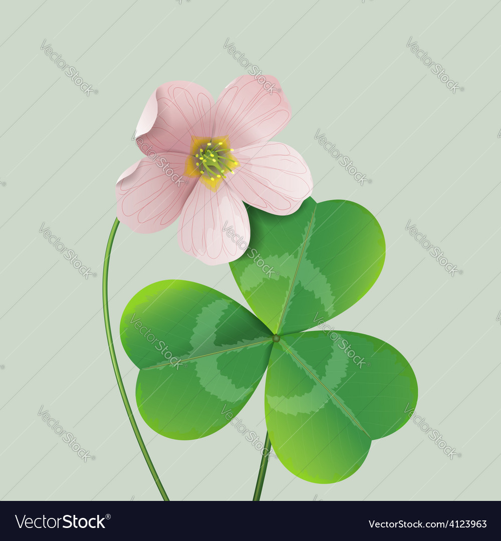 Oxalis vector | Price: 1 Credit (USD $1)