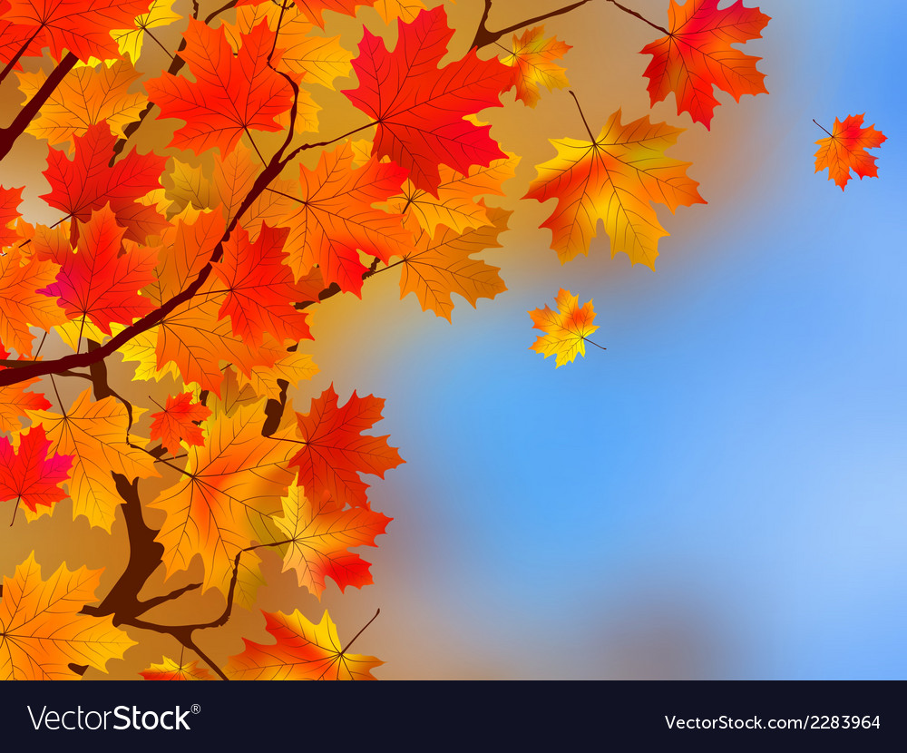 Background made of autumn leaves eps 8 vector | Price: 1 Credit (USD $1)