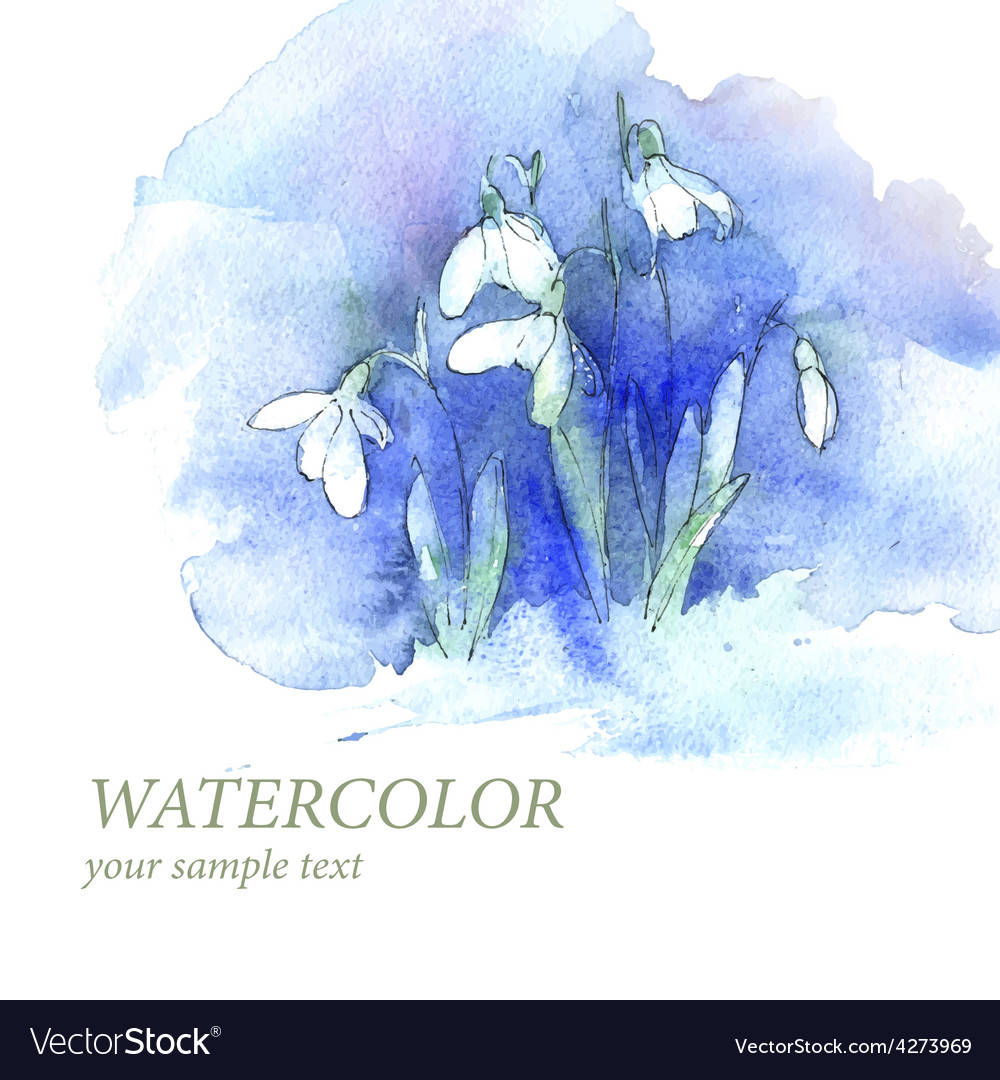 First spring flowers snowdrops in snow background vector