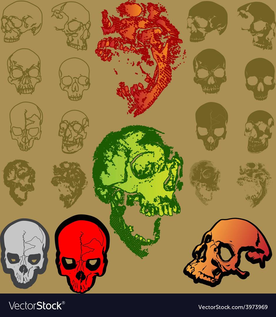 Skeleton nice color vector | Price: 1 Credit (USD $1)