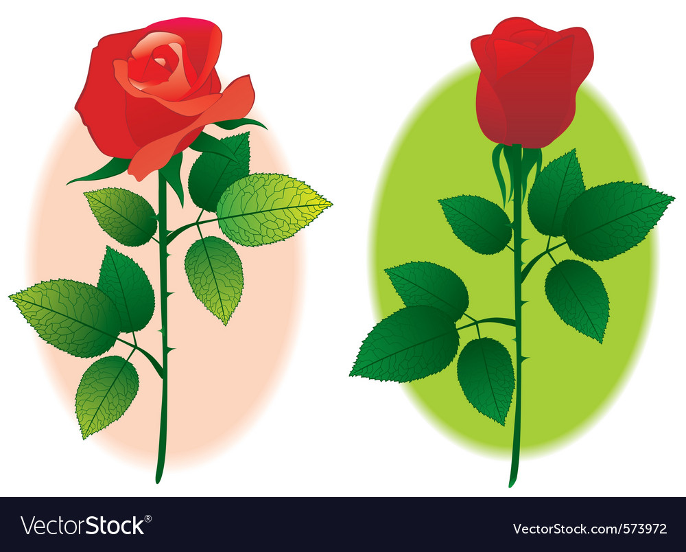 Couple of rose vector | Price: 1 Credit (USD $1)