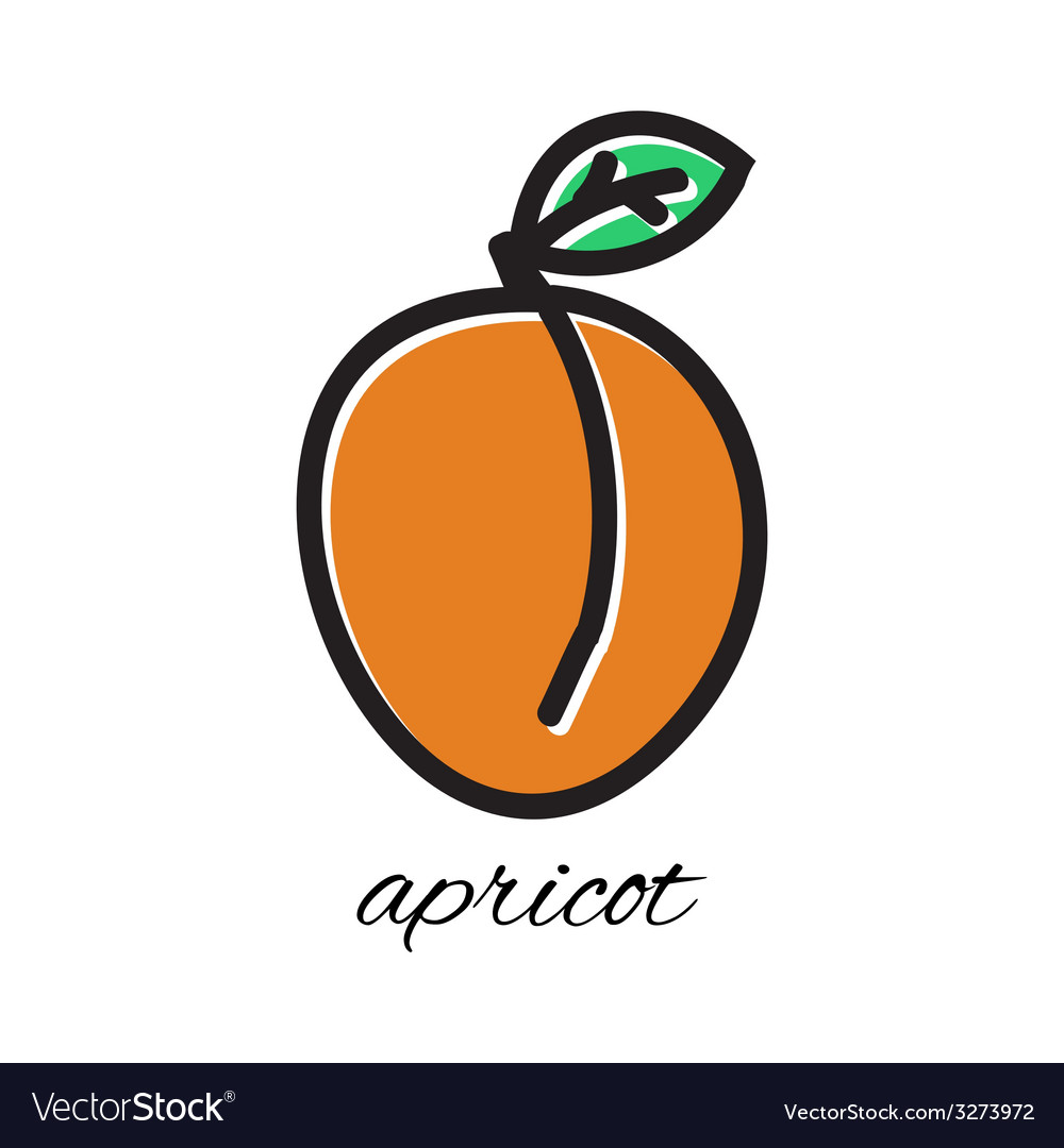 Doodle apricot hand-drawn object isolated on white vector | Price: 1 Credit (USD $1)