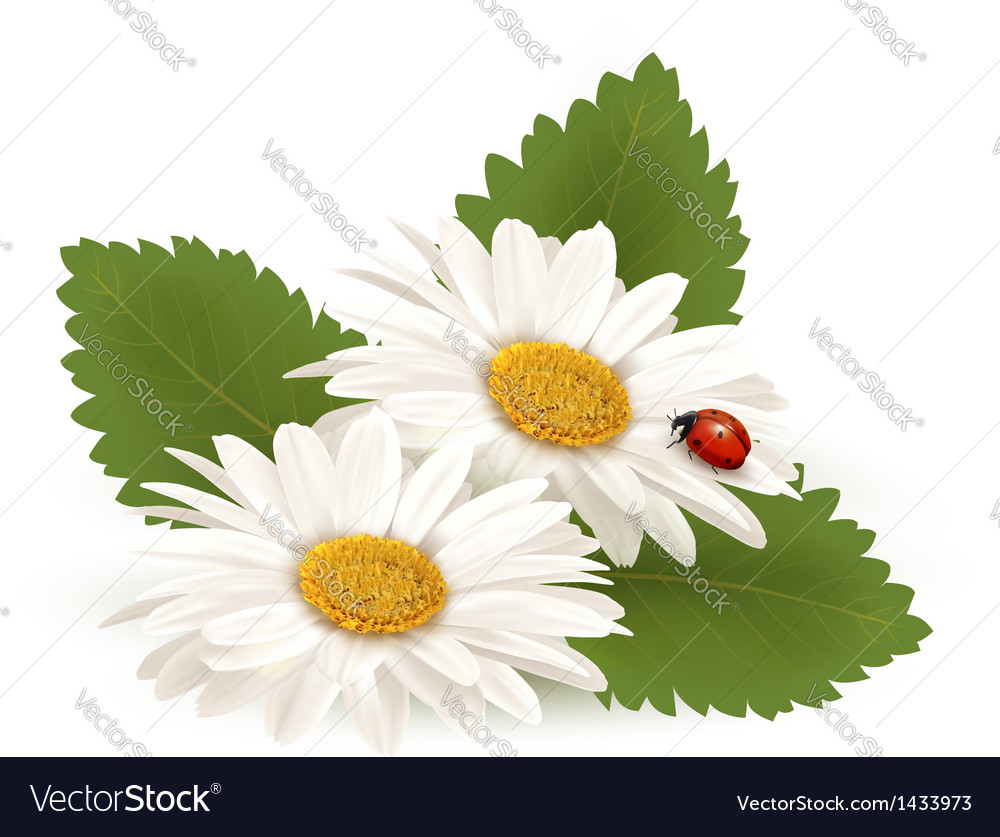 Nature summer daisy flower with ladybug vector | Price: 1 Credit (USD $1)