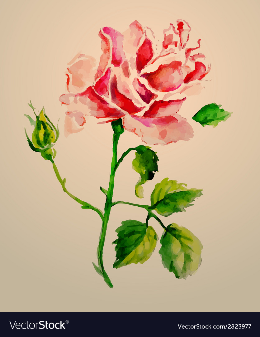 Rose watercolour vector | Price: 1 Credit (USD $1)
