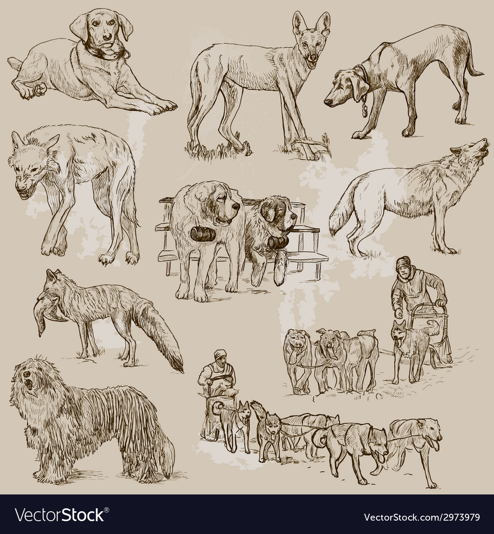 Dogs - an hand drawn pack vector | Price: 1 Credit (USD $1)