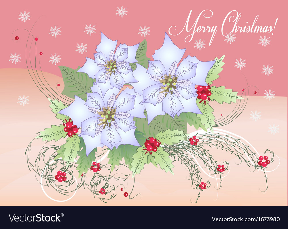 Card white poinsettia and berry vector | Price: 1 Credit (USD $1)