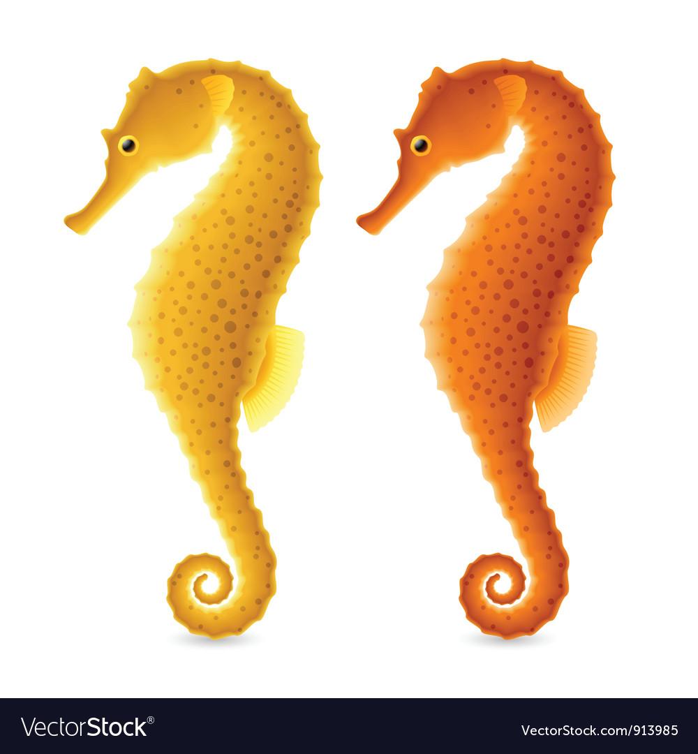 Seahorse vector | Price: 3 Credit (USD $3)