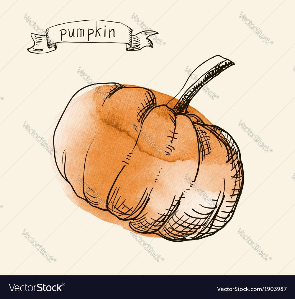 Pumpkin sketch vector | Price: 1 Credit (USD $1)