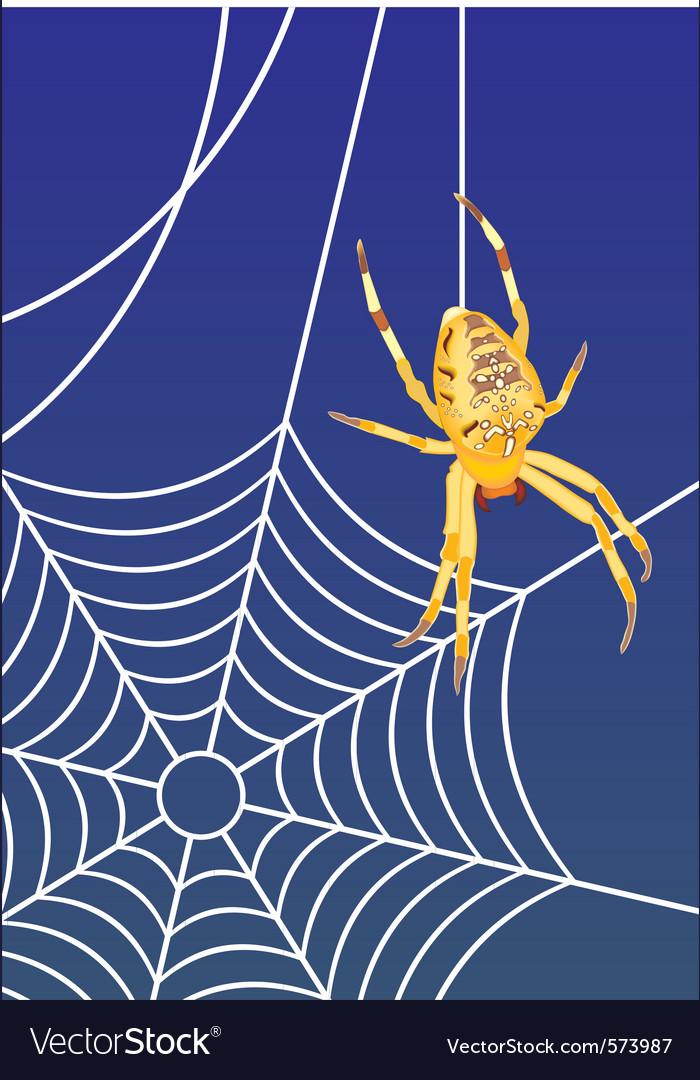 Spider web vector   Price: 1 Credit (USD $1)