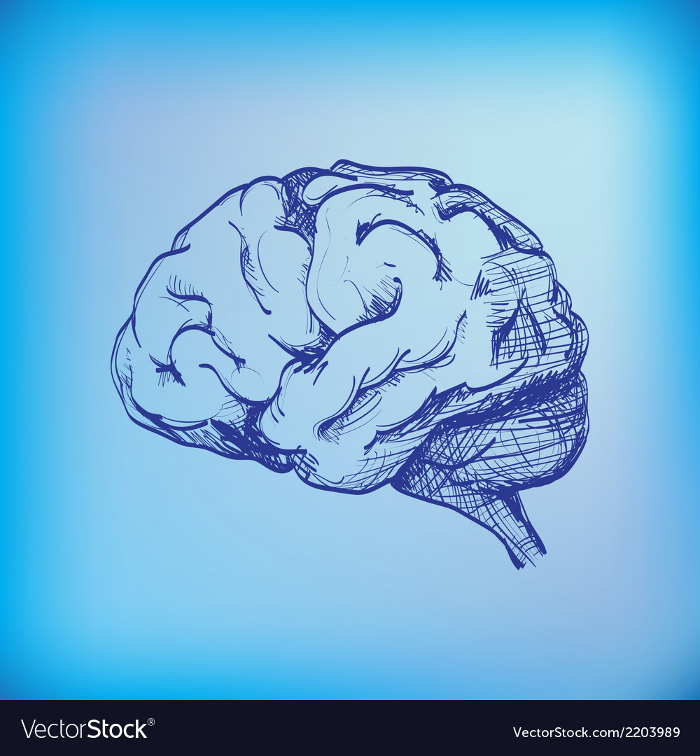 Human brain vector | Price: 1 Credit (USD $1)