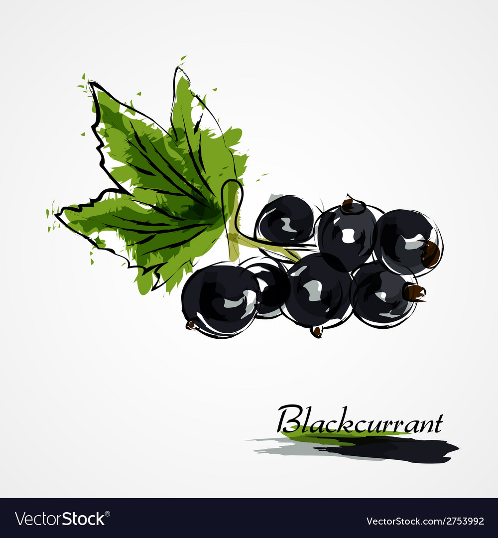Blackcurrant vector | Price: 1 Credit (USD $1)